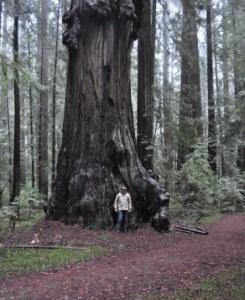 Me and a unspeakably magnificent redwood. Talk about feeling hugged!